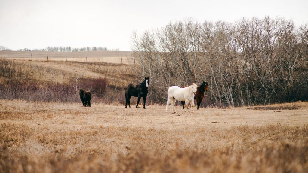 Live stock insurance - horses in a field